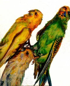 Arrangement with Parakeets