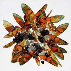 Moths in a ring