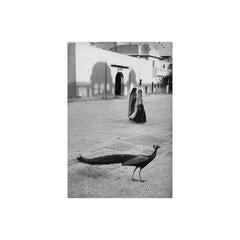 The Peacock, Jaipur, India