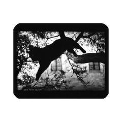 Cat Jumping Tree