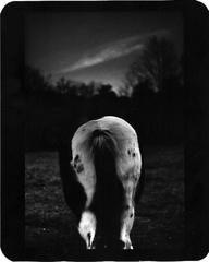 Horse Bum, Montecompatri
