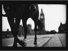 Horse, Westminster Bridge