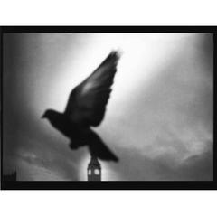 Pigeon, Big Ben