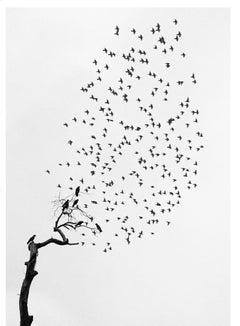 Delhi, India (Flock of Birds)