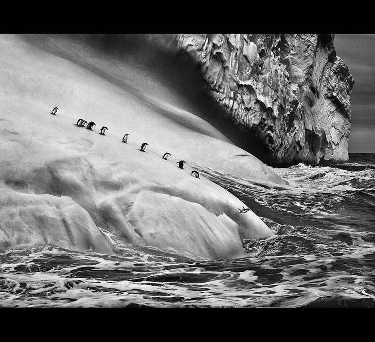 Chinstrap Penguins on an iceberg located between Zavodovski and Visokoi islands.