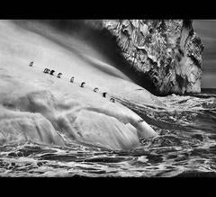Sebastião Salgado - Chinstrap Penguins on an iceberg located between Zavodovski and Visokoi islands.