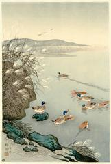 Mallards in coastal scene