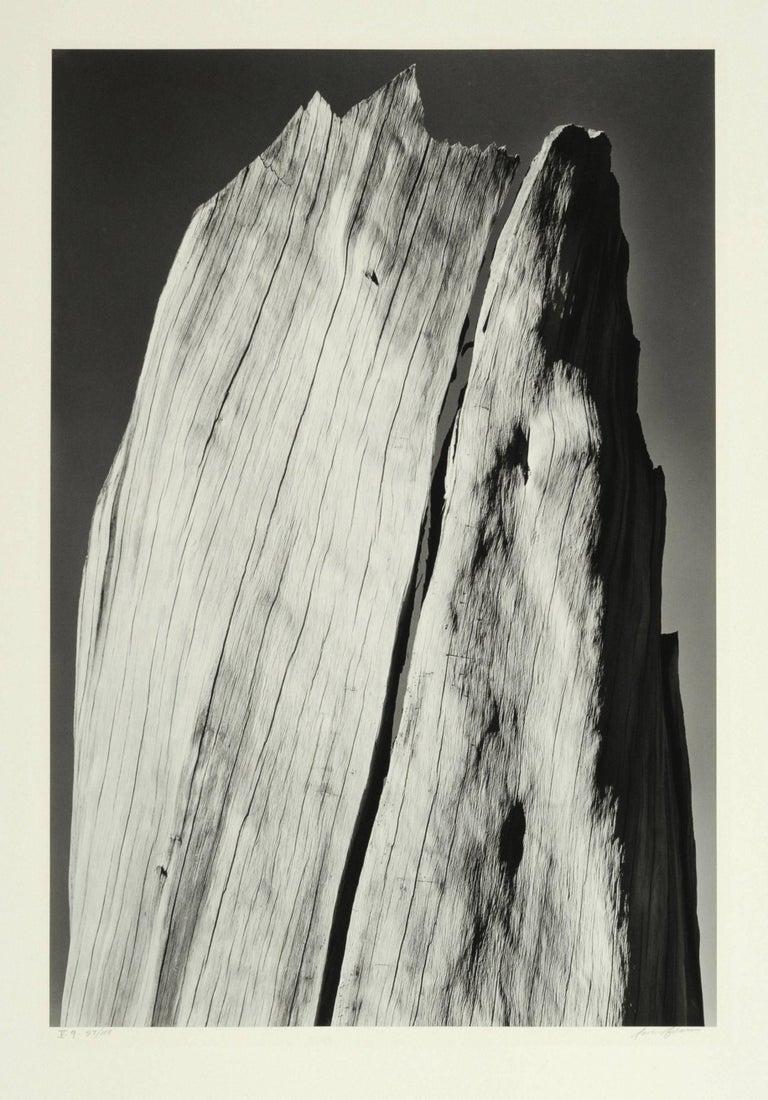 White Stump, Sierra Nevada, California