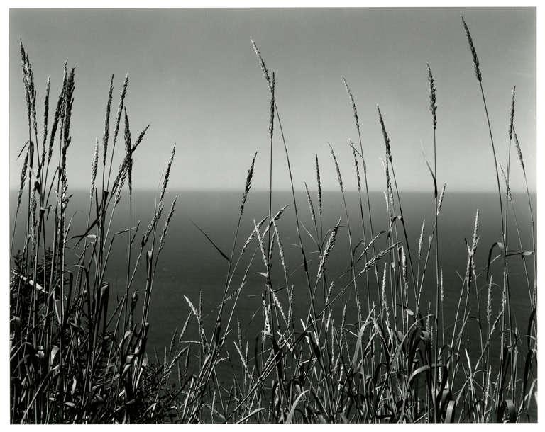 Edward Weston Landscape Photograph - Grass Against Sea
