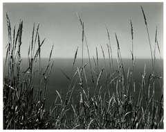Grass Against Sea