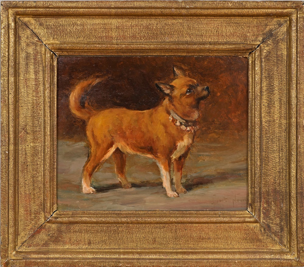 Dog Portrait of a Chihuahua Oil Painting on Board by Gaston Noury (1866-1936)