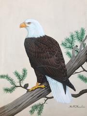 """""""American Bald Eagle"""""""