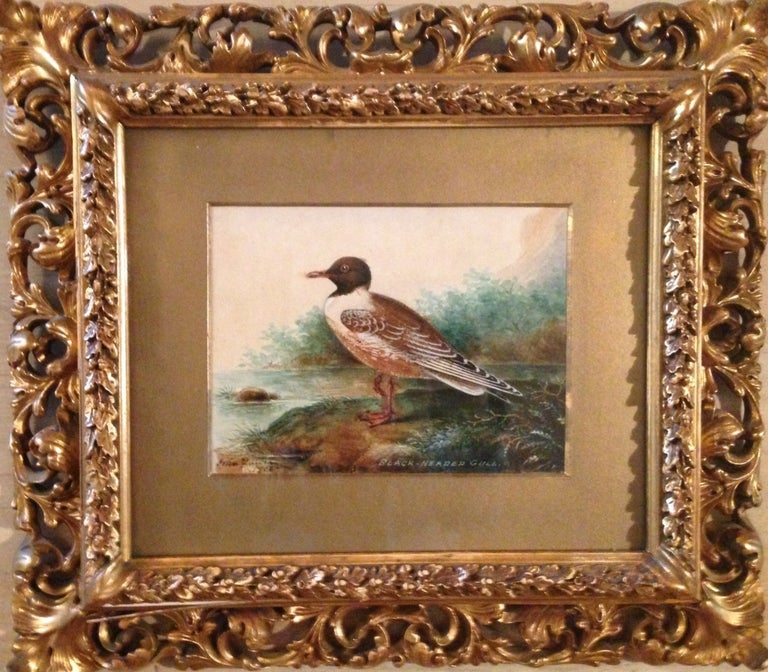 "John Duncan Landscape Painting - ""Black-Headed Gull"""