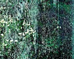 Visual Ambient Drone, Pacific Ocean, Calla Lilies