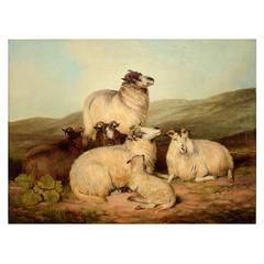 """Sheep on a Hillside"""