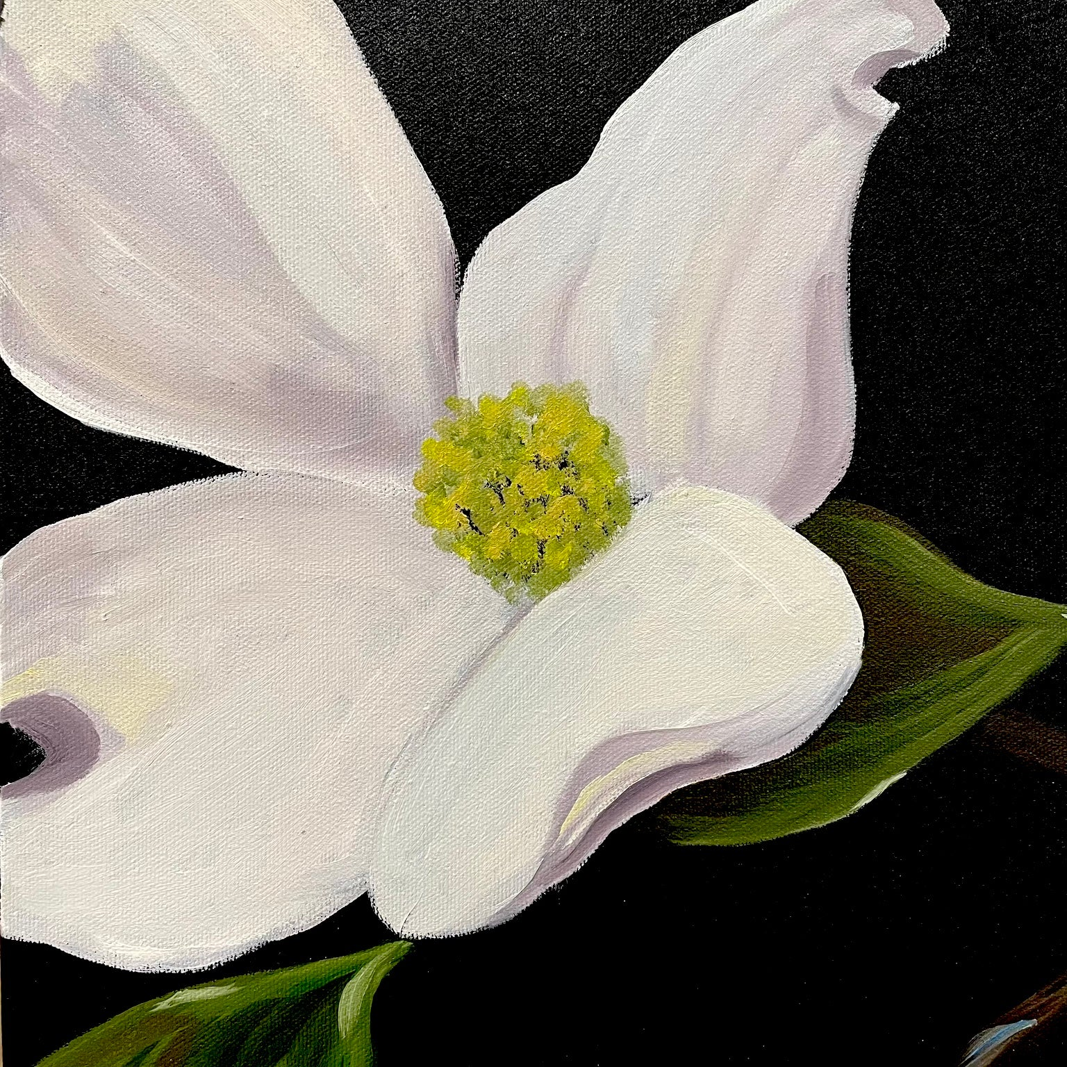 White Flowers and Green Leaves against a Black Background. Title - Wild Dogwood