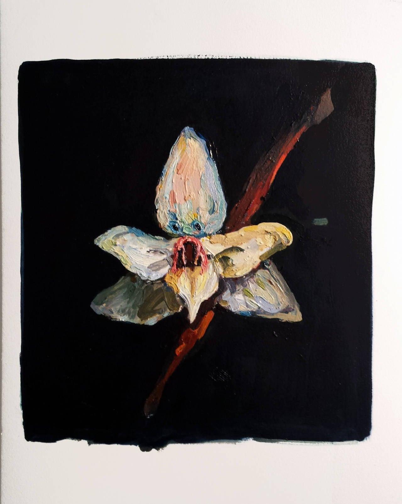Vampira Orchidea
