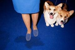 """Blue Corgis, Paris, France"" - Abstract Dog Show Photography - Canine Kingdom"