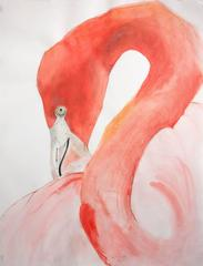 American Flamingo #2