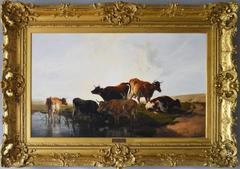 Cattle Resting