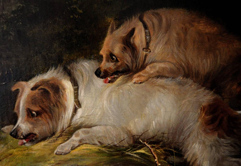 Edward Armfield British, (1817-1896) The Stand Off Oil on canvas, signed Image size: 19.5 inches x 26.5 inches  Size including frame: 27 inches x 34 inches  Edward Armfield was a prolific and popular artist who specialised in paintings of terriers