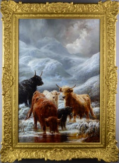 Cattle in the Winter Highlands