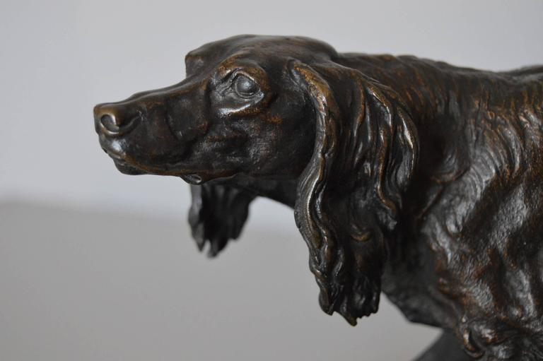 Pierre- Jules Mene French, (1810-1879) Bronze, signed 'P J MENE' Height: 6¼ inches Width: 12¼ inches Depth: 5¼ inches  A delightful bronze sculpture of an English Setter tracking game, by Pierre-Jules Mene. Raised upon a naturalistic base and
