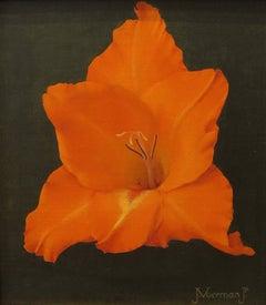 """""""Gladiola, Orange"""""""