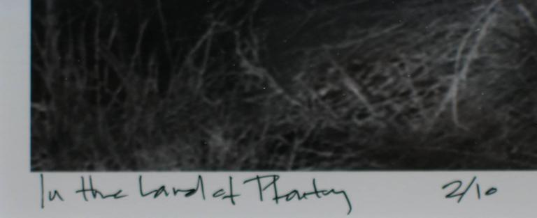 In the Land of Plenty - Contemporary Photograph by Preston Buchtel