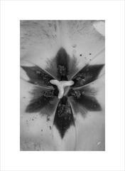 Anna Agoston - Untitled #120