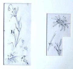 "Tsuhugaru Foujita - ""Flowers sketches"" - Original Drawings"