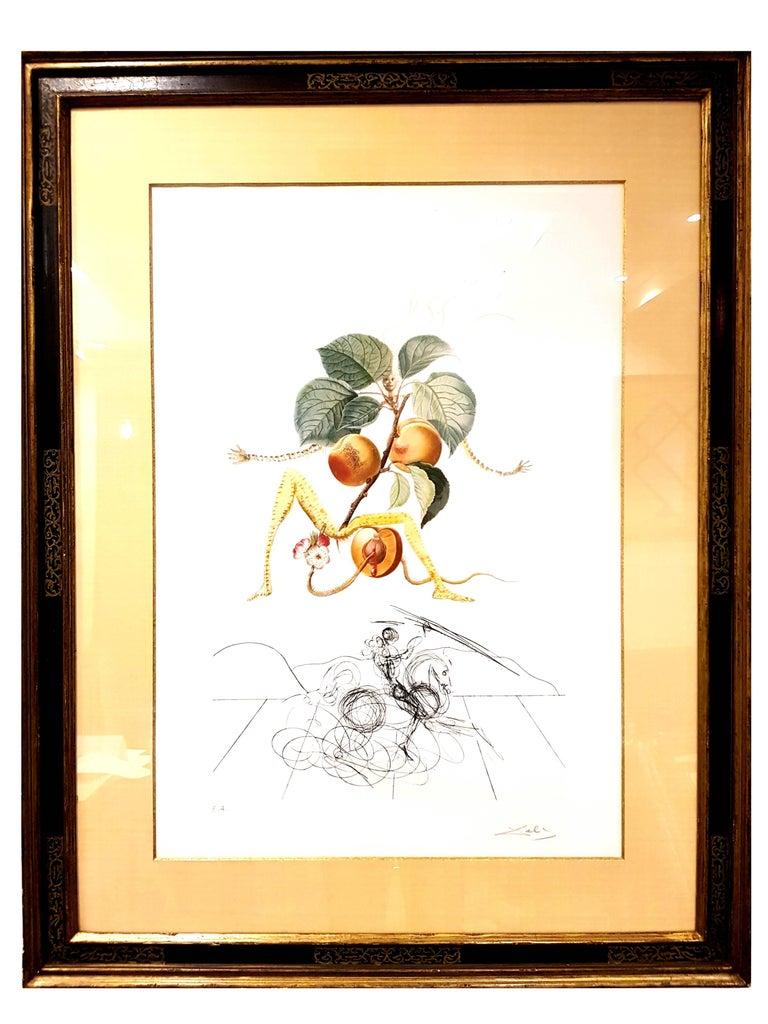 Salvador Dalí - Salvador Dali - Apricot - Original Hand ...