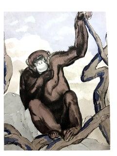 Paul Jouve - Chimpanzee - Original Engraving