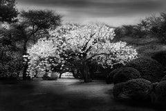 Plum Tree, Tokyo, Japan