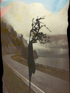 Trees, wind, Road With a Twig, color