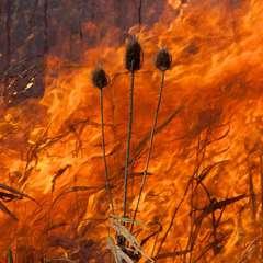 Burn No. 92