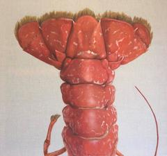 """""""La Queue"""" Red Lobster Tail Painted on Exposed Linen"""