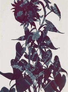 Taiyo Monotype