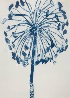 Allium Cyanotype