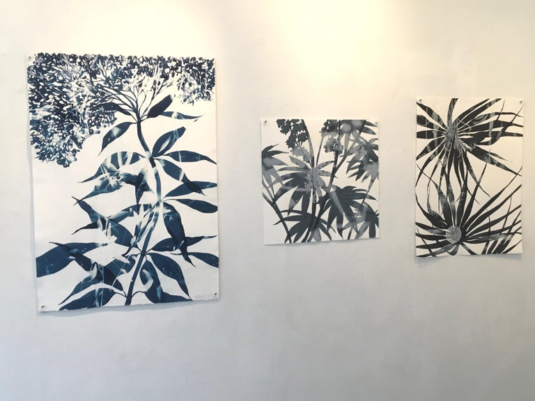 Palmetto, Botanical Cyanotype, Work on Paper, Blue - Gray Landscape Print by Cynthia MacCollum