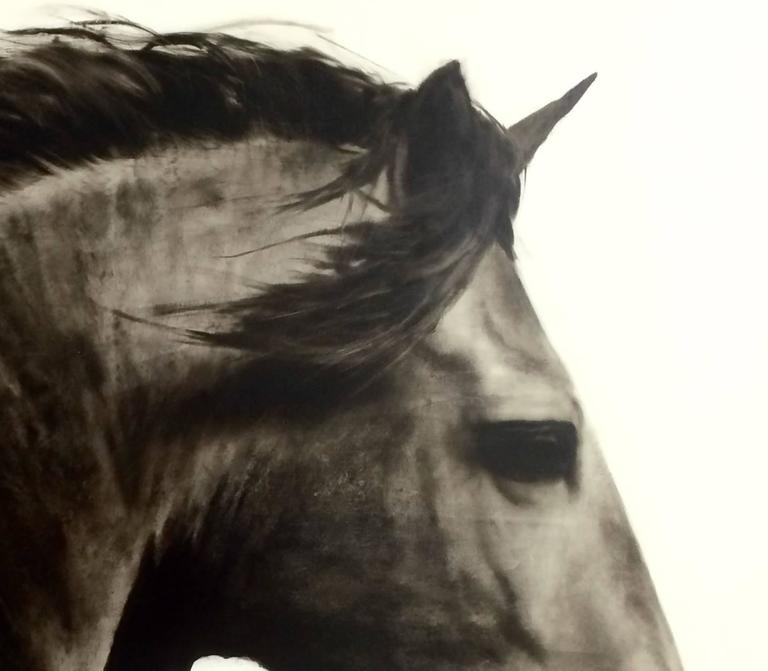 Flee to Freedom - Black Animal Painting by Ken Peloke