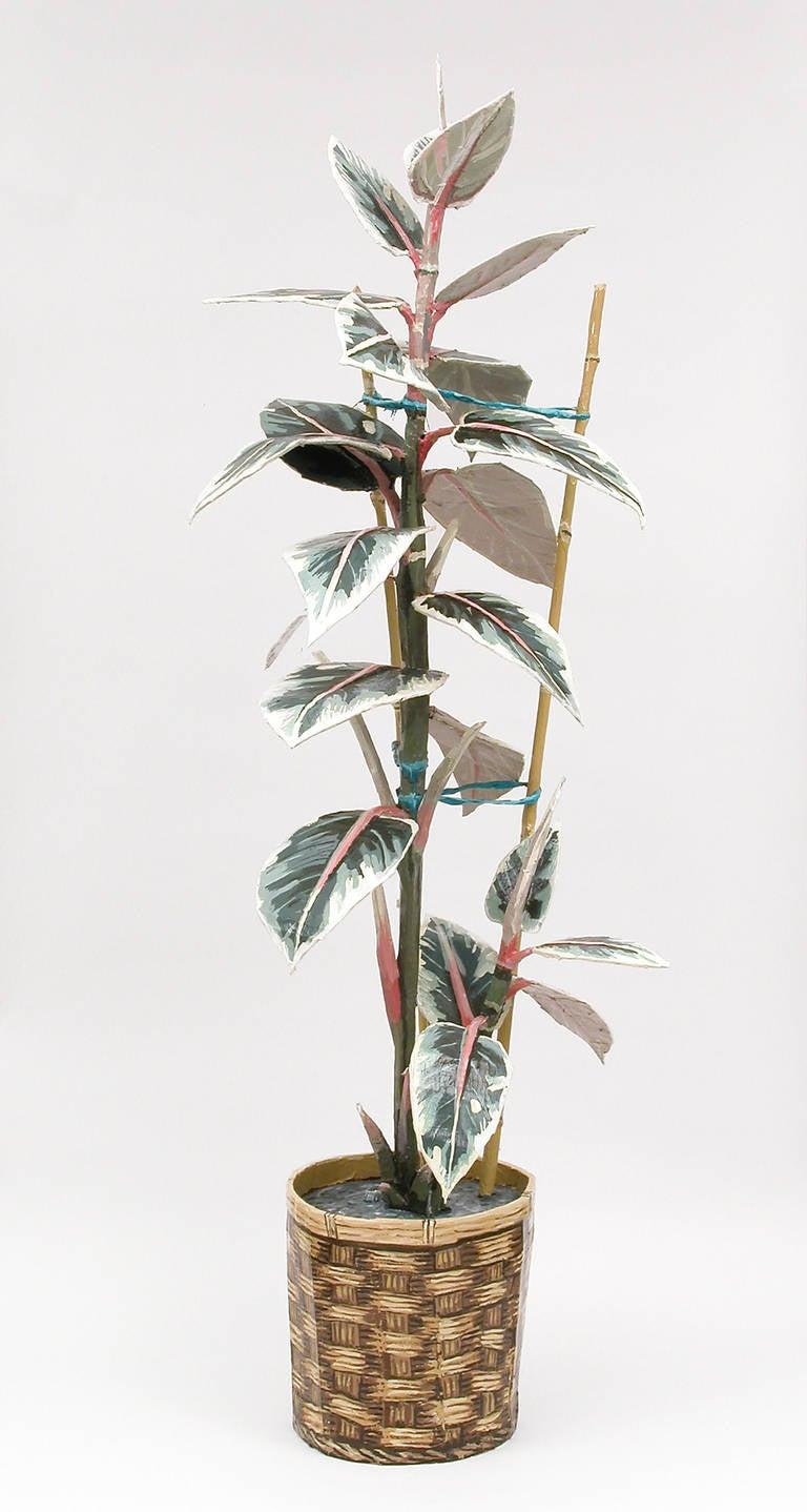 Jean Lowe - Rubber Plant 1
