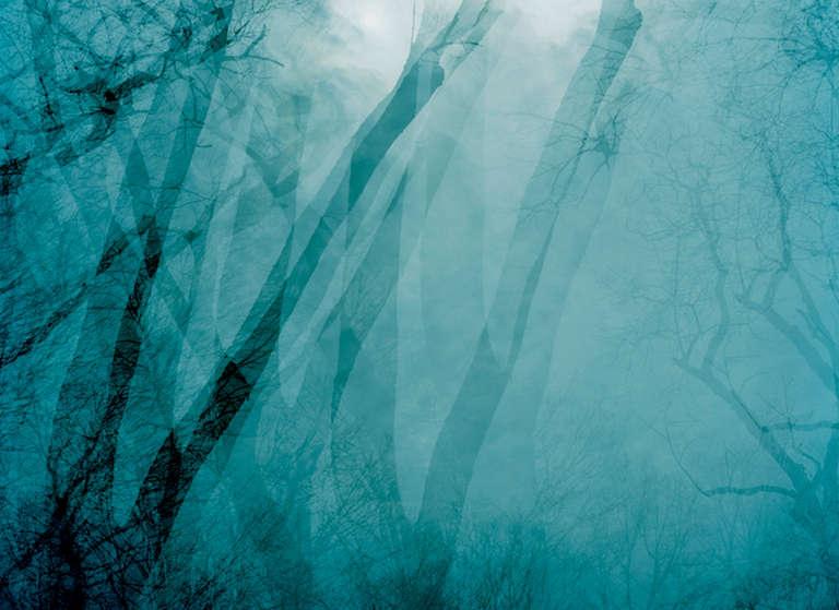 Leah Oates Color Photograph - Prospect Park 10