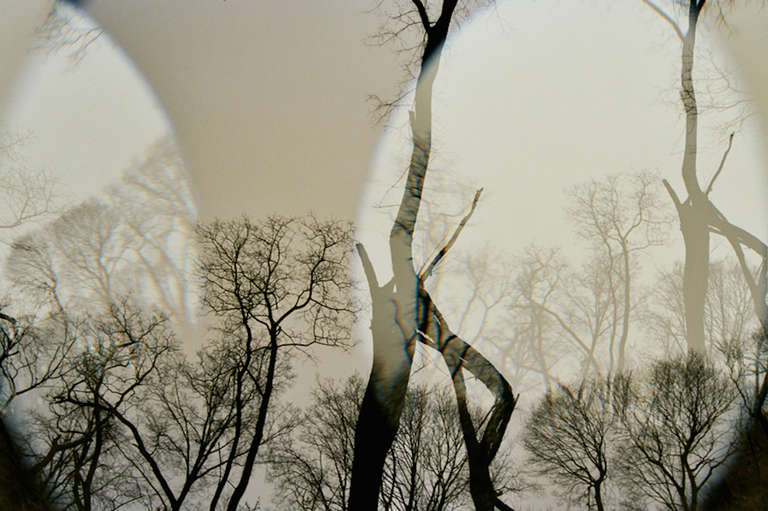 Leah Oates Color Photograph - Prospect Park 3
