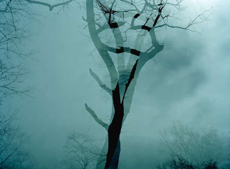 Leah Oates Landscape Photograph - Prospect Park 6