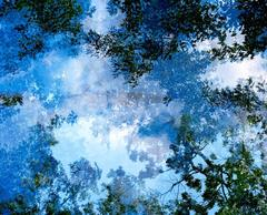 Transitory Space (Sky Blue Tree 23 Blue, Prospect Park Brooklyn)