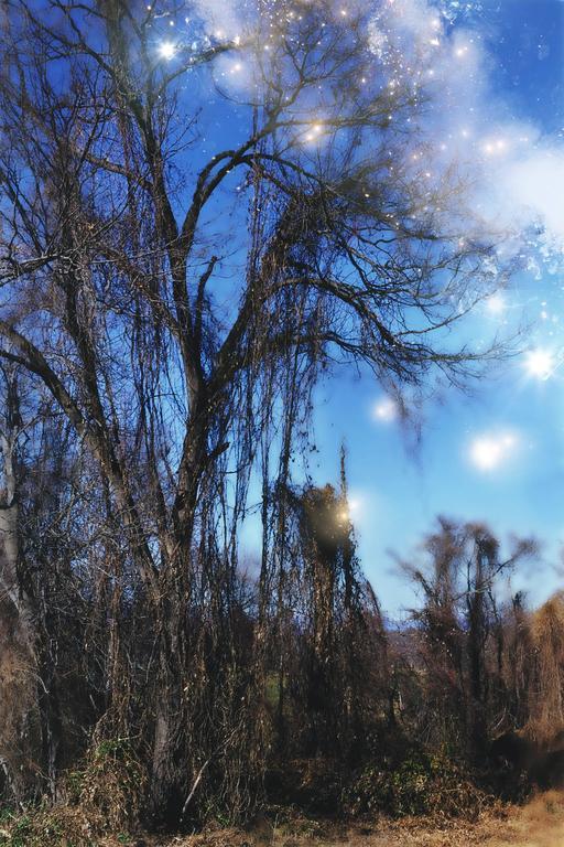 Lisa DiLillo - Forgotten for a Memory 1