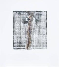 Alyse Rosner, Split 12 (metallic), 2006, Acrylic Paint, Graphite