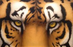 Tiger Eyes II