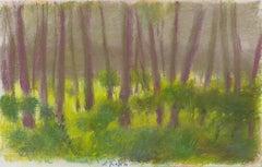 Focused on the Undergrowth
